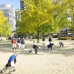 下福島運動場で練習!